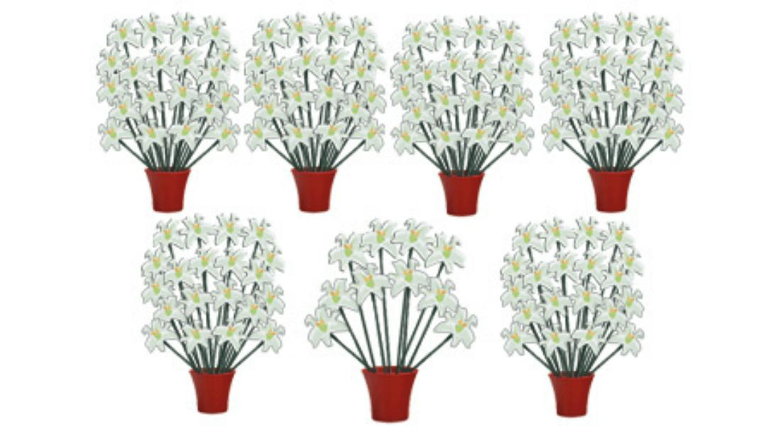 130 lilies